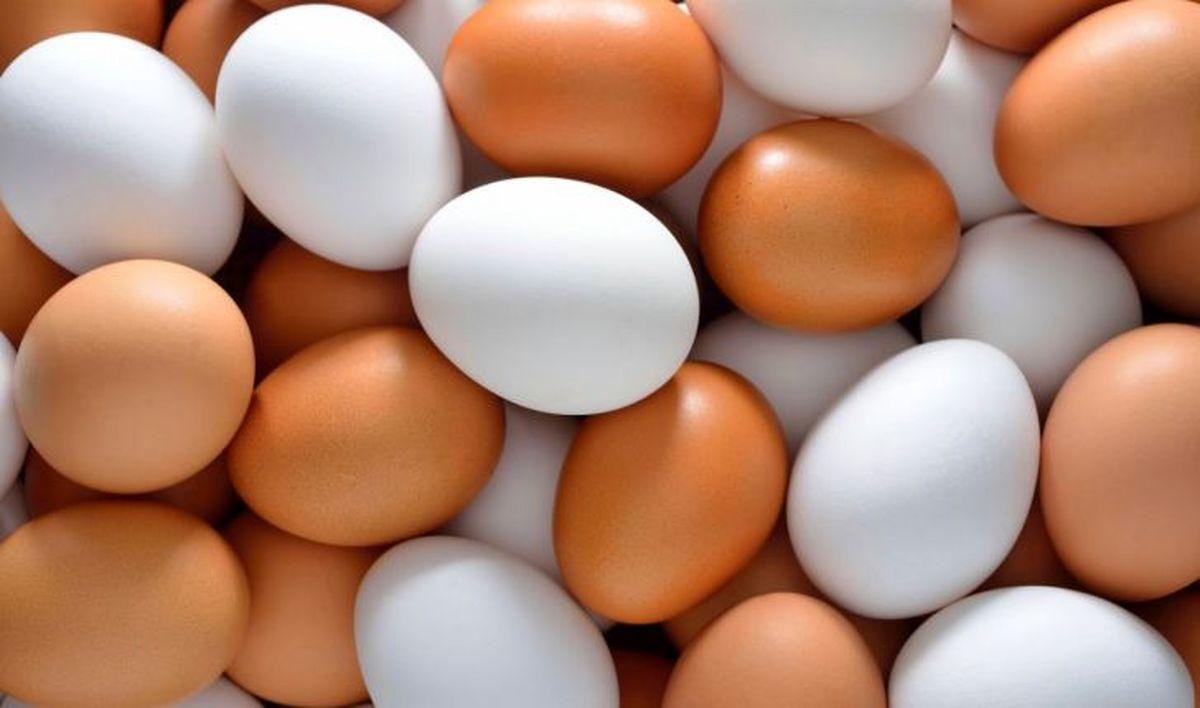 فوری | تخم مرغ از فردا گران میشود!