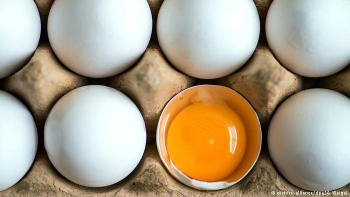 علت گرانی تخم مرغ چیست؟